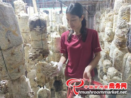 越南:菌菇朵朵開 菇農幸福來
