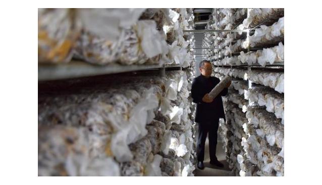 河南:香菇产业助力卢氏县脱贫摘帽