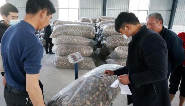 湖北郧阳:多举措助力香菇俏销市场