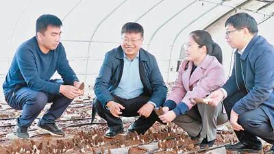 常明昌:送技术上门 发展食用菌产业带村民致富