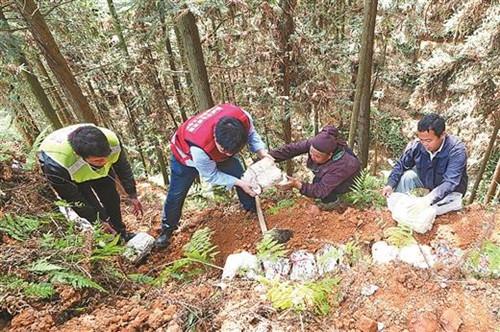 广西:林下种植灵芝项目助力农民增收前景广