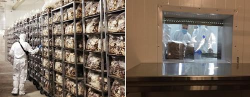 乌克兰:餐饮业停摆对香菇贸易产生影响 而香菇零售业对本地的市场需求正在增长
