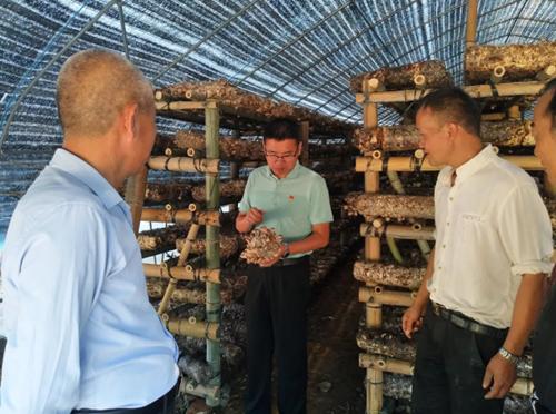 江西武宁:香菇产业助农民增收见效快