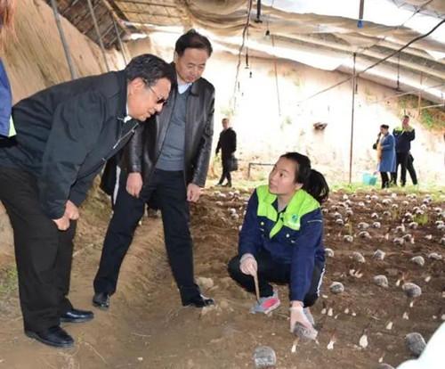 张国平:用汗水浇灌羊肚菌