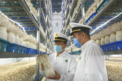 山东:德州食用菌实现首次出口!打开东盟市场