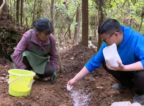 贵州印江:林下栽培食用菌 托起农民增收新希望