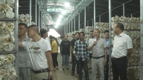 贵州关岭:断桥镇召开食用菌基地现场观摩会
