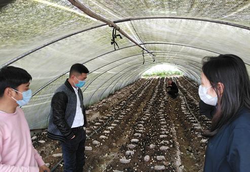 小小羊肚菌里挖掘大财富——专访四川谨信农业科技有限公司总经理郑羽翔