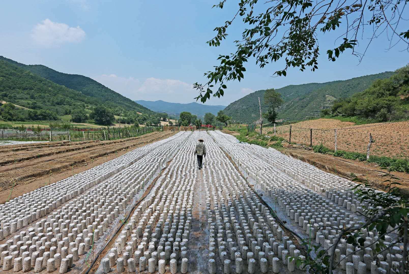 第五届全国木耳产业创新发展大会初定7月在山西中阳县举办