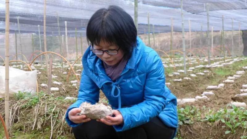 女博士耿新翠:愿用毕生精力推动食用菌产业不断向前发展