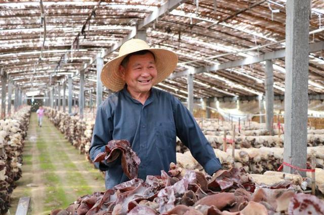 江苏:黑木耳产业带领群众走上致富路