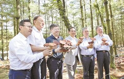 """云南會澤:6000畝林下食用菌有""""錢途"""""""