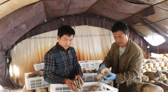 """刘考顺:发展食用菌产业 为群众撑起""""致富伞"""""""
