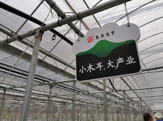 """陕西柞水:创新带贫模式 """"小木耳""""成""""大产业"""""""