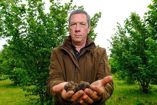 英农场价值3.7万美元松露因疫情滞销 农场主将其免费赠与当地居民品尝
