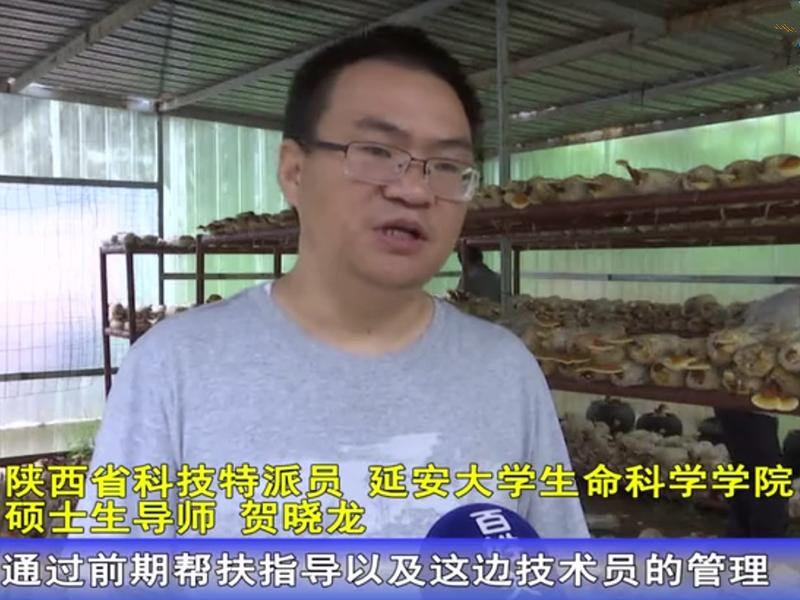 """科技特派员贺晓龙:让食用菌成为农民致富的""""好帮手"""""""