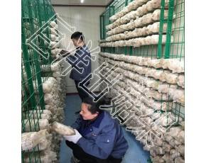 蘑菇培养房网架 秀珍菇网格架 食用菌出菇层架 养菌架