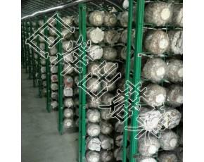 杏鲍菇出菇网格架 大棚食用菌培养架 平菇出菇专用架子
