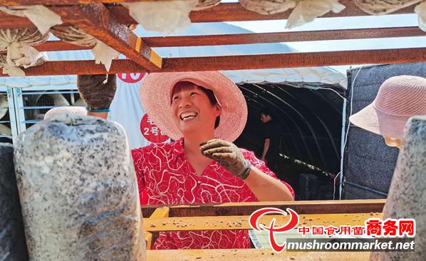 河南開封市:平菇生產已成為尉氏縣的亮麗名片