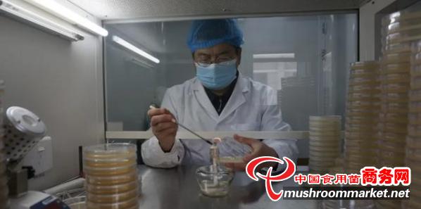 路等学:结缘食用菌 科技助脱贫