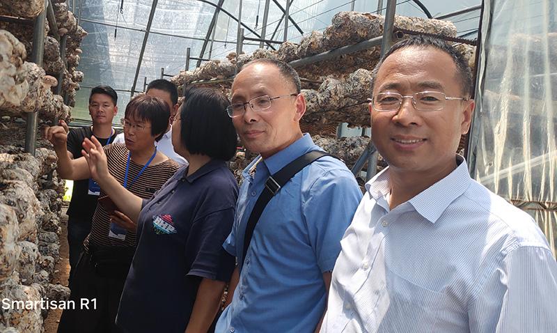 张玉红:一生专注平菇半熟料栽培技术研发和推广