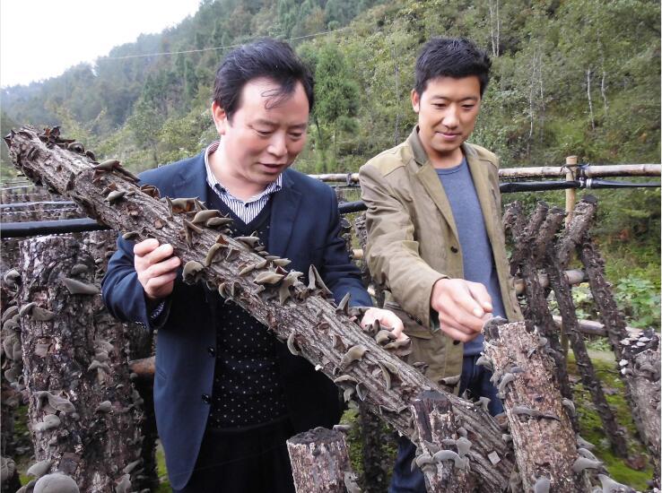 马明元:立志让小小食用菌成为秦巴山区扶贫大产业