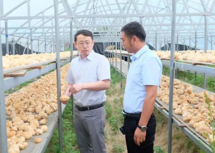 韩跃武:制作优质菌种 服务四方菌农