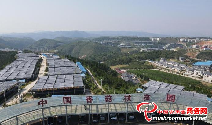 湖北十堰市:發展香菇小鎮 建設香菇產業基地