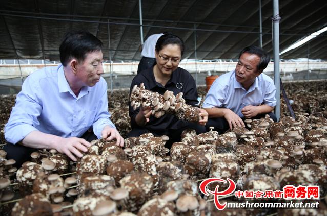 河北省農技協香菇專業委員會在遵化市成立