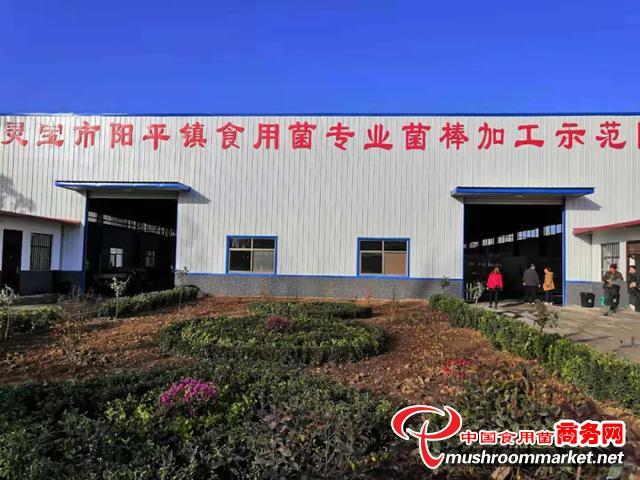 """河南省灵宝市:党建引领富民路 """"小香菇""""种出""""大幸福"""""""