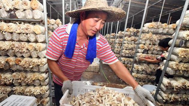 福建福州:村美民富產業興 鄉村振興大步走
