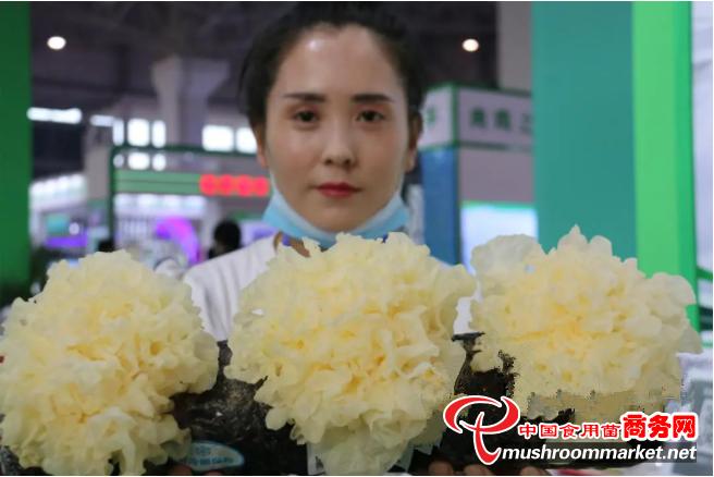 河北沧州福农生物科技有限公司智能化、全自动化生产银耳 助农脱贫