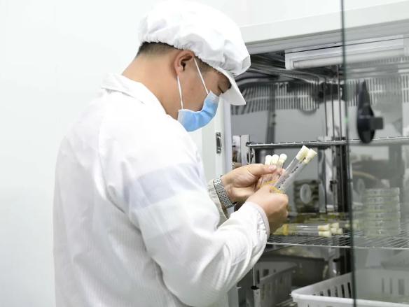 贵州安龙:加强菌种研发培育 助力食用菌产业发展