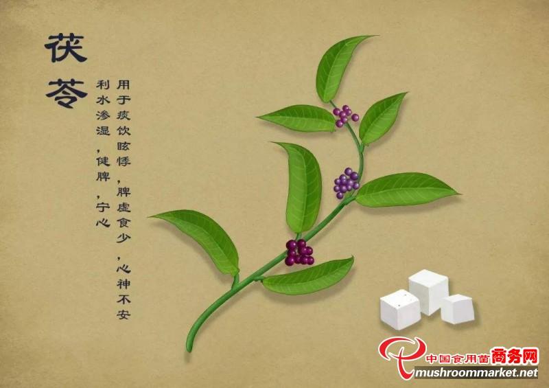 中国中药协会茯苓专业委员会今日在武汉成立