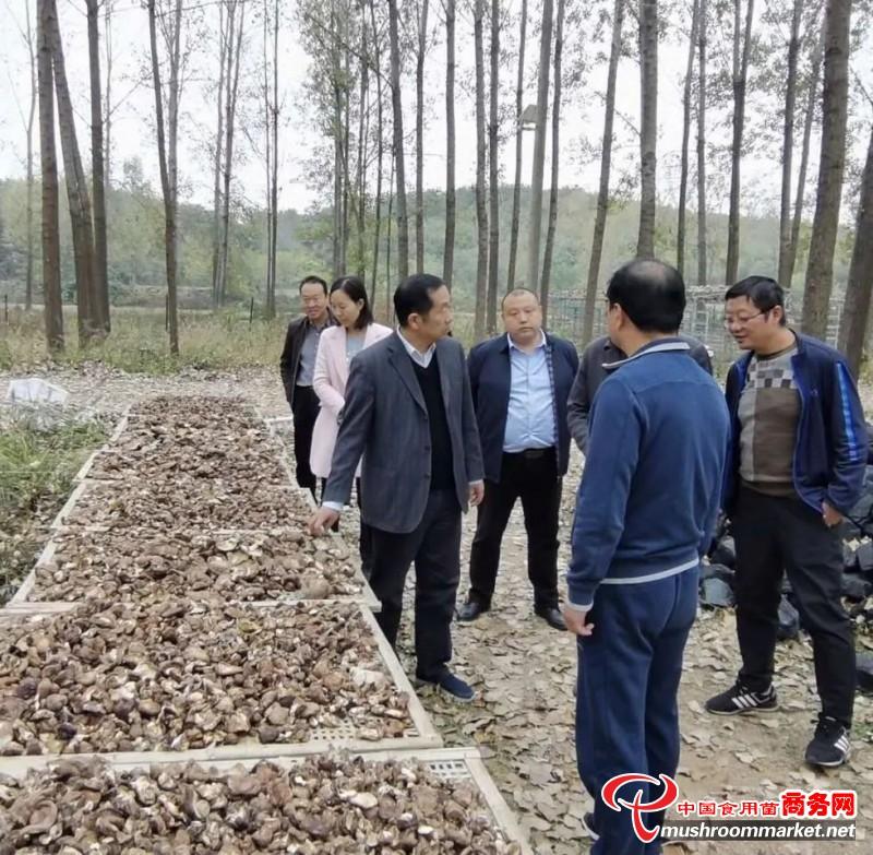 """河南省南阳市:香菇产业扶贫基地挖出""""第一桶金"""""""