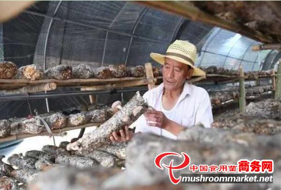 山西沁源县:菌类种起来 农民富起来