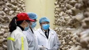 贵州威宁县雪榕生物科技有限公司新鲜杏鲍菇首次出口海外