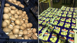 荷兰:食用菌市场形势稳定 圣诞节市场可期