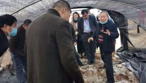 羊肚菌行业知名专家朱斗锡教授到迁西县指导羊肚菌产业发展