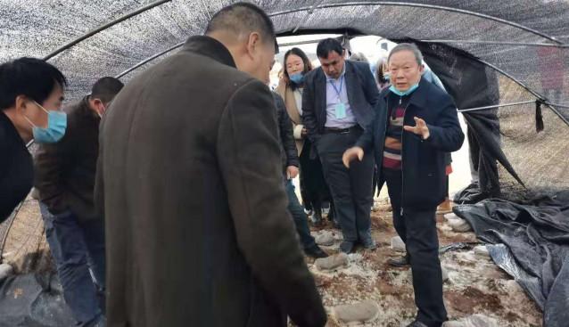 河北省迁西县成功举办羊肚菌高产栽培技术省级研修班