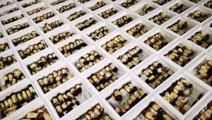 江苏常州市:迎来赤松茸丰收季 可冷链运输
