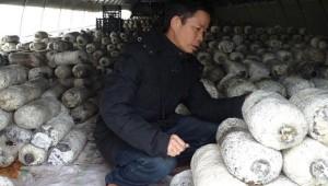 王建林︰发展食用菌,助力脱贫致富