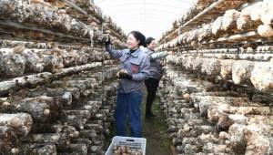 甘肃康乐县:鼓励支持群众大力发展食用菌产业