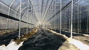 山西省阳泉市:羊肚菌产业发展添活力 同心工程谱新篇