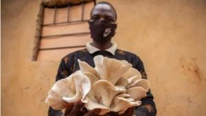 """卢旺达:小菌草念响""""致富经"""""""