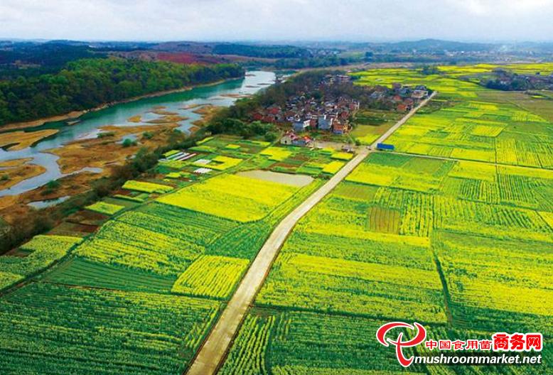 农业农村部:2021年全国计划新建高标准农田1亿亩