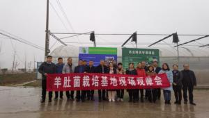 江苏省淮安市农科院举办羊肚菌高效栽培技术观摩会