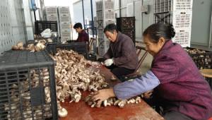 食用菌生产机械化农民教育培训班在湖北省房县白鹤镇堰河村成功举办
