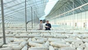 """山东潍坊市潍城区于河花菇产业园 小花菇做出""""大产业"""""""