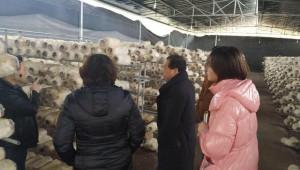 四川省乐山市经作站到峨边县松林菌业有限公司开展技术指导工作。